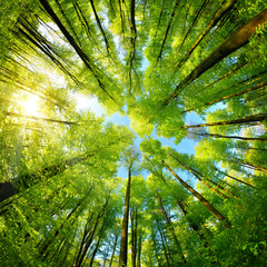 Spheric panorama in a forest, magnificent upwards view to the treetops