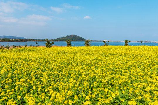 Seongsan ilchulbong in Jeju island,South Korea.