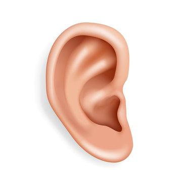 Human ear organ hearing health care closeup realistic 3d isolated icon design vector illustration