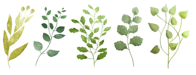 Watercolor branch with leaves. Herbs Illustration isolared on white background. Botanic set