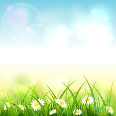 Blue Spring or Summer Nature Background with Grass and Flowers