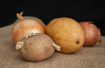 potatoes with sprouts in the foreground onion and pumpkin on a black background on burlap