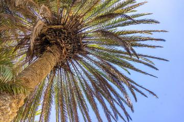 Palm trees on Crete, Greece