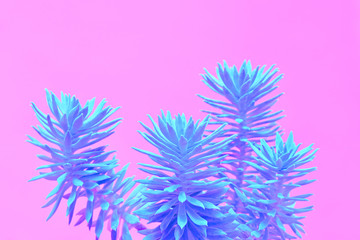Fashion Neon tropical aloe in Blue Color. Minimal Trendy stillife on Pink Design background. Art concept. Close-up aloe plant.