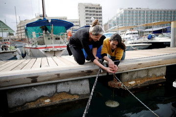 Israeli researchers, Noa Shenkar (L) and Gal Vered, remove a cluster of sea squirts nestled to a brick, from the Red Sea, as part of research work an Israeli team is conducting in the Israeli resort city of Eilat