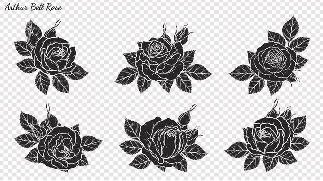 Rose ornament vector by hand drawing.Beautiful flower on transparent background.Arthur Bell rose vector art highly detailed in line art style.Flower tattoo for paint or pattern.