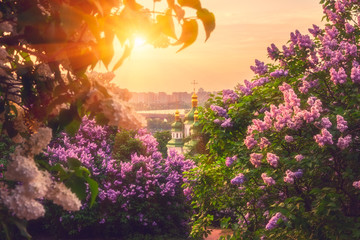 Botanical garden in Kyiv (Kiev) at sunrise. Amazing morning landscape with blossoming lilac trees, view of the domes of Vydubichi monastery, city, Dnieper river and sun in colorful cloudy sky, Ukraine