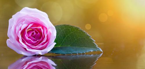 Spring forward, springtime concept - web banner background of pink rose flower