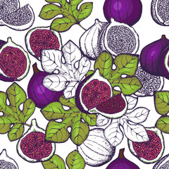 Fruits of Fig tree ,whole and part, with leaves isolated on white background.Vector design with hand drawn figs sketch.Seamless pattern.