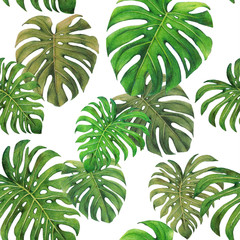 Monstera leaf seamless pattern,colored pencil drawing techniques,illustration
