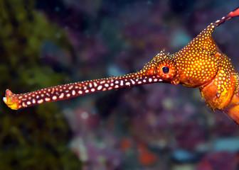 Fotobehang Koraalriffen Colorful seadragon head