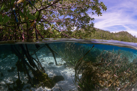 Roots of mangroves in Raja Ampat
