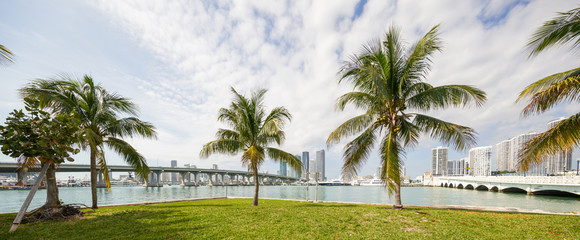 Photo of palm trees from Biscayne Island Miami FL west view towards Downtown Miami