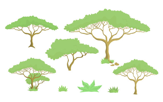 Baobab tree design set isolated on white background-vector illustration.
