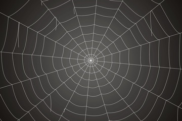 Creepy spider web on a gray background
