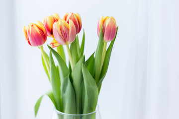 young spring flowers, orange and yellow tulips in a transparent vase on a white background, natural light