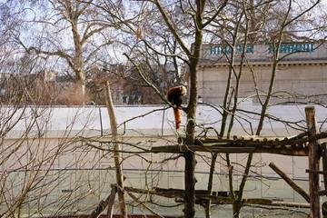Zoo Antwerpen dieren