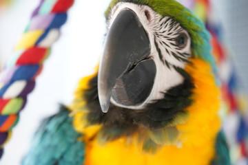 Acrylic Prints Parrot Parrot Parot Macaw Maccaw Pappegaai Papegaai