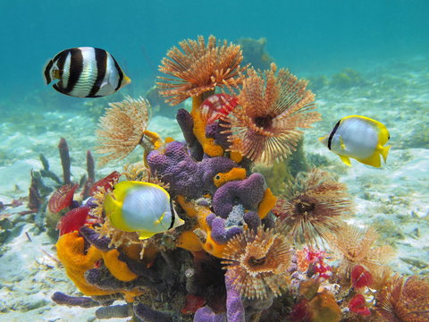 Colorful marine life underwater in the Caribbean sea with worms, sponges and tropical fish