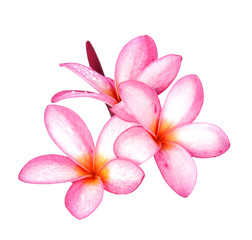 water drop Frangipani flower isolated on white background
