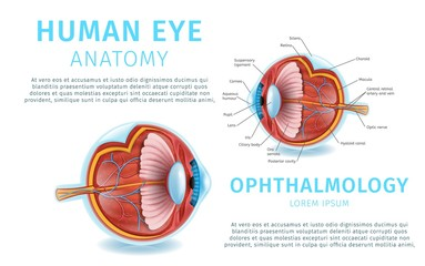Human Eye Anatomy Structure. Medical Infographics