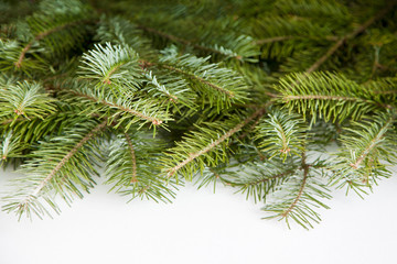 Wide Christmas border arranged with fresh fir branches isolated on white shaped as an arch