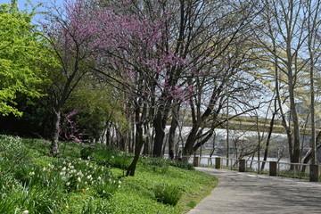 Spring day in Cincinnati downtown