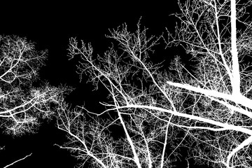 photo, silhouettes of tree branches on a black background