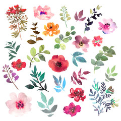 Watercolor flowers hand drawn colorful beautiful floral set with yellow pink red blue blossom plant