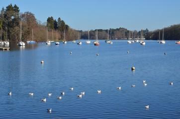 Erdre river, Nantes, France