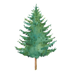 watercolor  green spruce