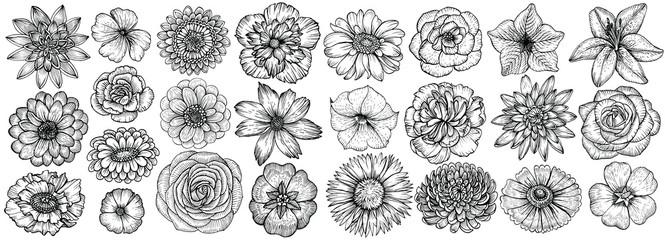 Hand drawn flowers, vector illustration. Floral vintage sketch.