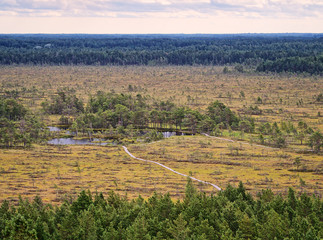 Rannametsa Tolkuse nature study trail. Aerial summer view over the wetland from the observation tower. Estonia.