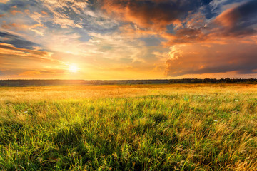 Summer landscape with uncultivated field and beautiful sunset above it.