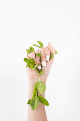 female hand holding green mint leaves isolated on white, environmental saving concept