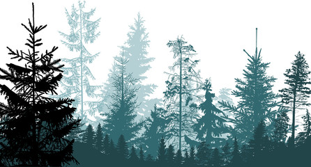 cyan firtrees forest on white background