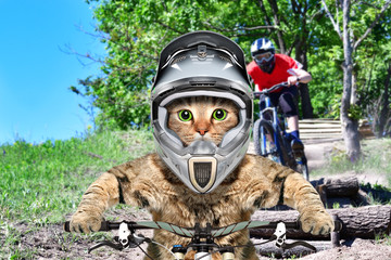 Cat in a helmet on a bicycle participating in a cycling competition