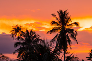 Last light with coconut.