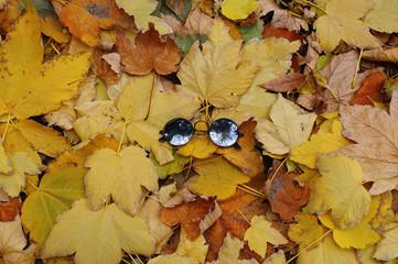 black round glasses on fallen leaves. black glasses on yellow leaves