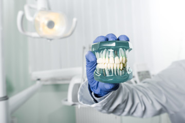 cropped view of dentist in latex glove holding teeth model