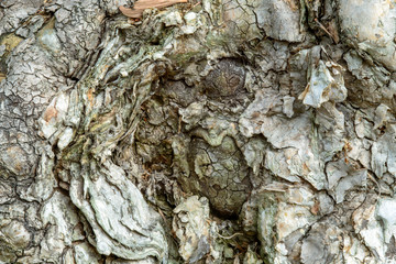 Close up of Melaleuca wood bark texture