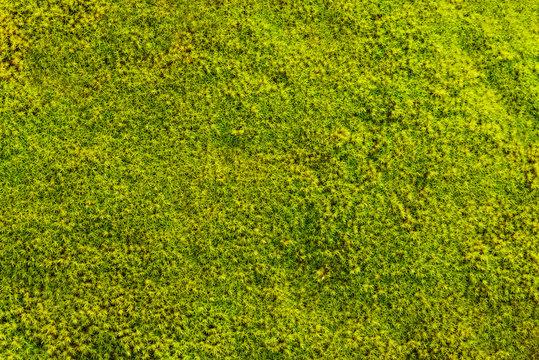 Wunderschönerschöner Moosstruktur in freundlichem grün