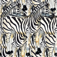 Seamless pattern with zebra