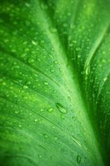 Wet green leaf close-up