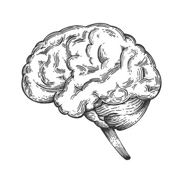 Human brain schematic vintage sketch engraving vector illustration. Scratch board style imitation. Black and white hand drawn image.