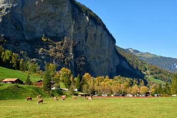 Autumn scene of the mountains with the Staubbach waterfall and the old wooden barns and cows on the meadow in Lauterbrunnen valley in Switzerland.