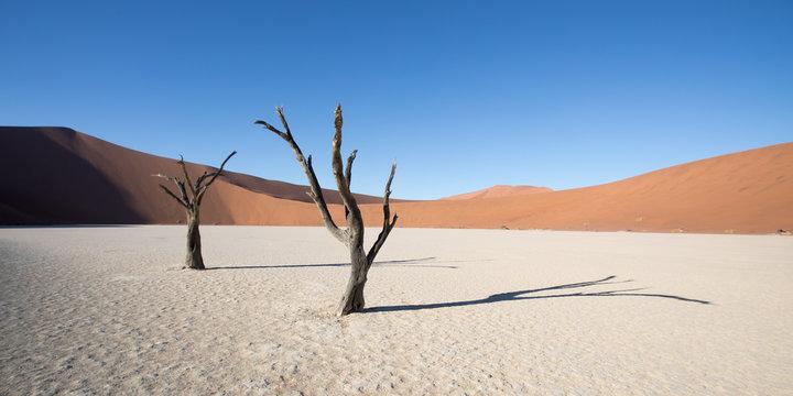 Silhouette portrait of dead tree in deadvlei, Sossusvlei, Namib Naukluft National Park Namibia