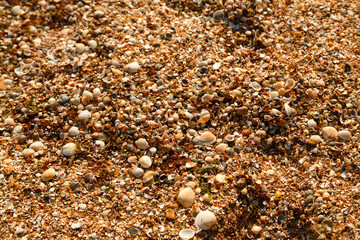 Seashore studded with small shells Horizontal frame
