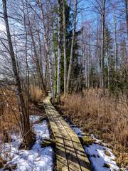 wooden boardwalk in forest swamp area