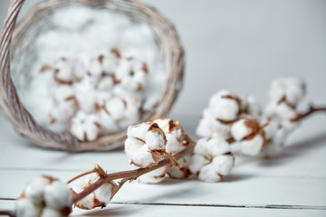 A fluffy cotton flowers and a wicker basket on a white wooden table